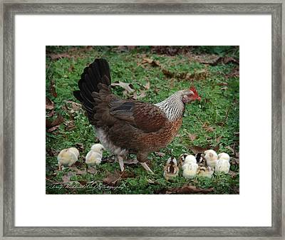A Hen And Her Chicks Framed Print