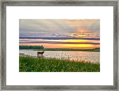 A Highland Cow In The Lowlands Framed Print