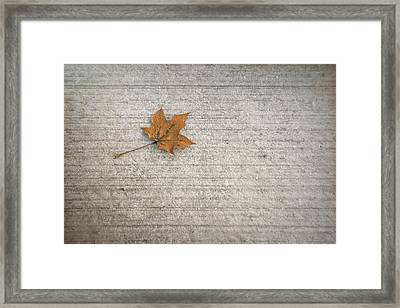 A Hint Of Autumn Framed Print by Scott Norris