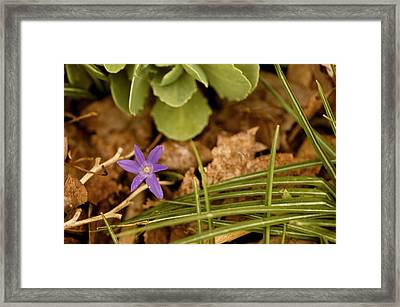 A Hint Of Spring Framed Print by Samantha Eisenhauer