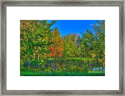 A Hint Off Fall Framed Print by Robert Pearson