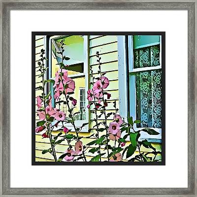 A Holly Hocks Morning Framed Print by Mindy Newman