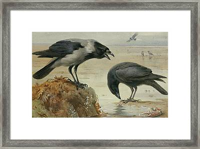 A Hooded Crow And A Carrion Crow Framed Print