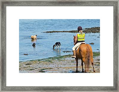 A Horse And Three Dogs At The Beach Framed Print by Terri Waters