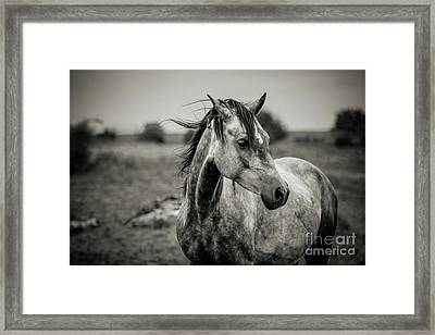 A Horse In Profile In Black And White Framed Print