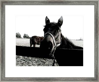 A Horse In The Country Framed Print