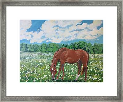 A Horse Named Dante Framed Print by Stella Sherman