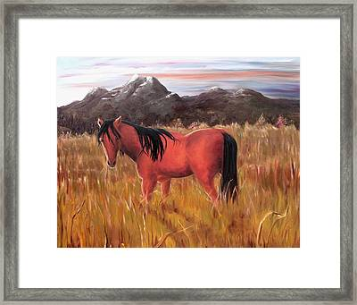 A Horse Of Course Framed Print by Diane Daigle