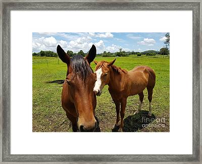 A Horse's Touch Framed Print