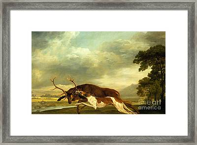 A Hound Attacking A Stag Framed Print by George Stubbs