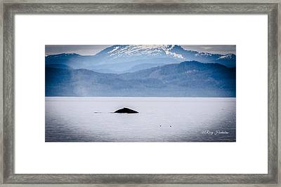 A Humpback Appears Framed Print
