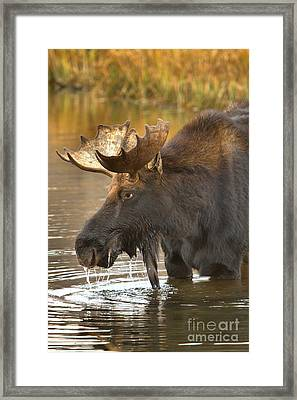 A Hungry Gaze Framed Print by Adam Jewell