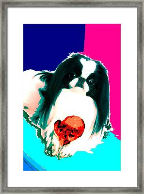 A Japanese Chin And His Toy Framed Print by Kathleen Sepulveda