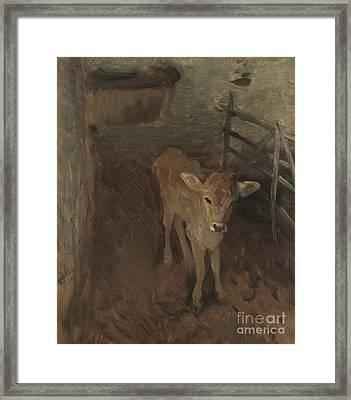 A Jersey Calf, 1893 Framed Print by John Singer Sargent