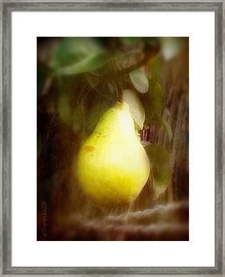 A Juicy Fruit Framed Print by Mimulux patricia no No