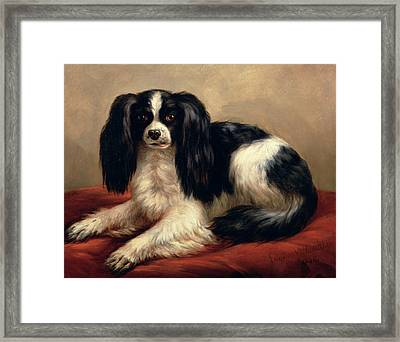 A King Charles Spaniel Seated On A Red Cushion Framed Print