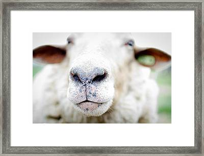 A Kiss Framed Print by Swift Family