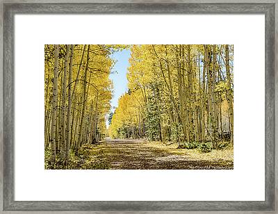 A Lane Of Gold Framed Print
