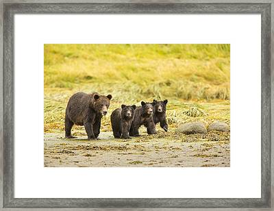 A Large Family Framed Print by Tim Grams