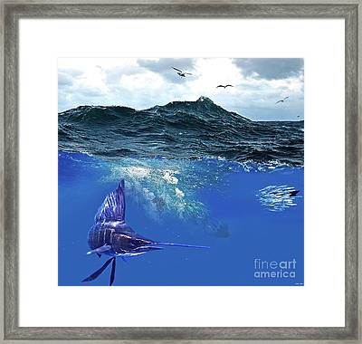 A Large Sailfish, Herding Schools Of Fish Framed Print