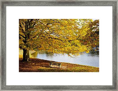 A Large Tree And Bench Along The Water Framed Print by John Short