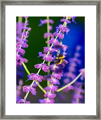 A Lavender World 2 - Paint Framed Print