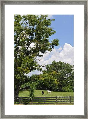 A Lazy Summer Day  Framed Print