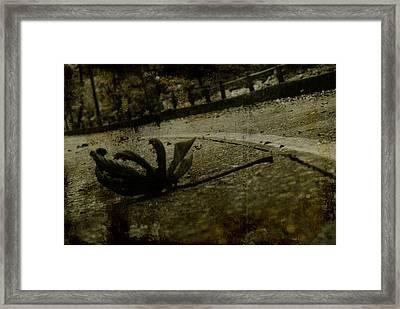 A Leaf By The Way Framed Print by Valmir Ribeiro