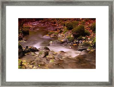 A Leaf Dappled Stream Framed Print