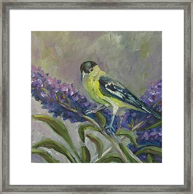 Framed Print featuring the painting A Lesser Goldfinch by Susan  Spohn