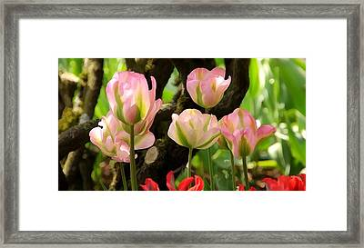 A Life In Dreams Framed Print