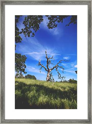 A Life Well Lived Framed Print by Laurie Search