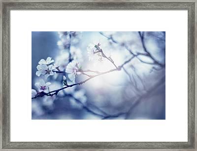 A Light Exists In Spring Framed Print