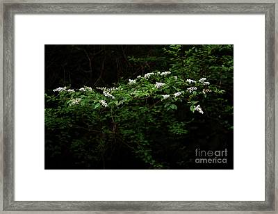 Framed Print featuring the photograph A Light In The Darkness by Skip Willits