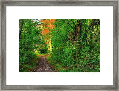 A Light In The Forest - Fair Hill Nature Center At Foxcatcher Farms - Cecil County, Md Framed Print