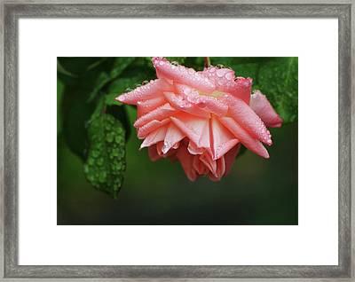 A Light Rain Framed Print by Terrie Taylor