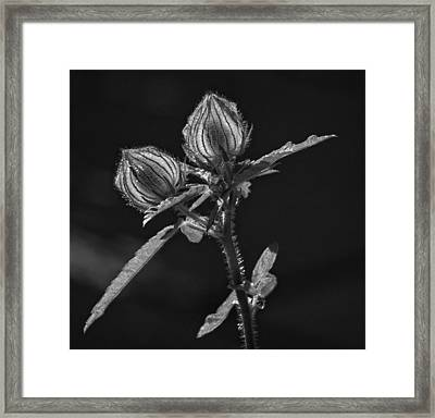 A Light Shines Black And White Framed Print