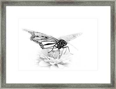 A Light Touch - Butterfly Framed Print by Nikolyn McDonald