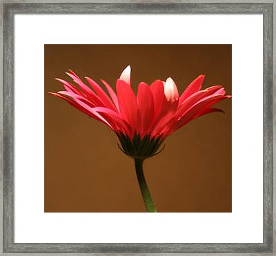 A Light Touch Of Beauty Framed Print by Julie Lueders
