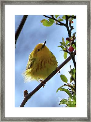 A Liitle Yellow Puff Ball Framed Print by Marle Nopardi