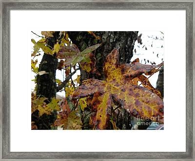 A Lil Bit Of Fall Framed Print