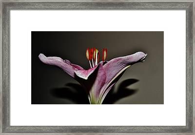 A Lily Framed Print