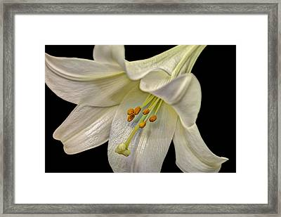 A Lily For Easter Framed Print