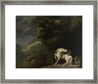 A Lion Attacking A Horse, 1770 Framed Print by George Stubbs