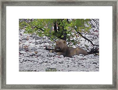 A Lion In Africa Framed Print