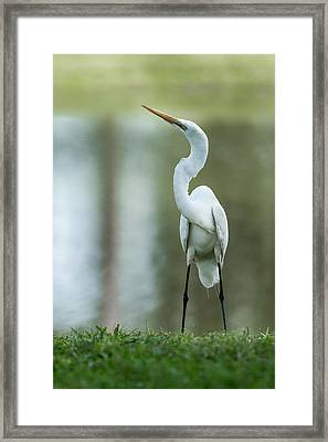 A Little Attitude Framed Print