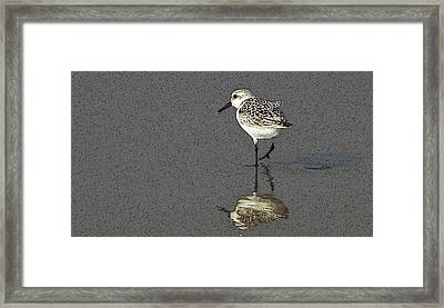 A Little Bird On A Beach Framed Print