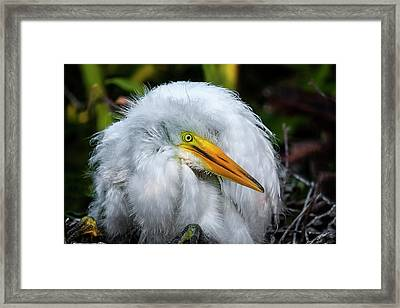 A Little Bit Of Fluff Framed Print