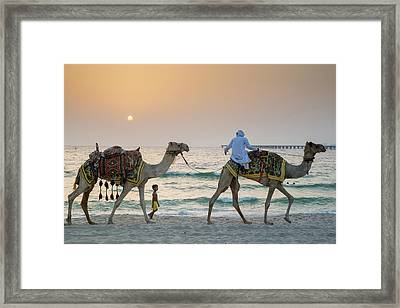 A Little Boy Stares In Amazement At A Camel Riding On Marina Beach In Dubai, United Arab Emirates Framed Print