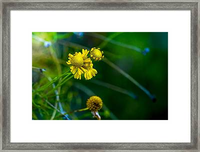 A Little Cheerfulness Framed Print